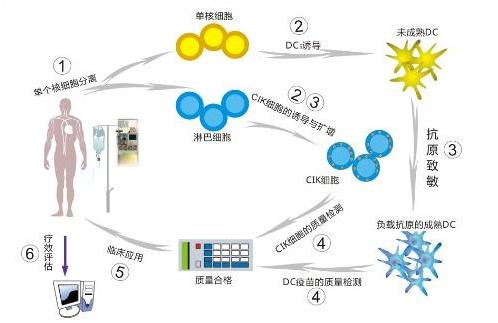 肿瘤生物细胞免疫治疗过程